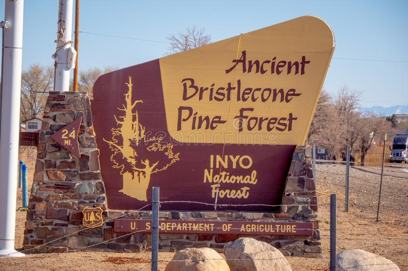 Ancient Bristlecone Pine Forest - LONE PINE CA, USA - MARCH 29, 2019. Ancient Bristlecone Pine Forest - LONE PINE CA, UNITED STATES OF AMERICA - MARCH 29, 2019 royalty free stock photos