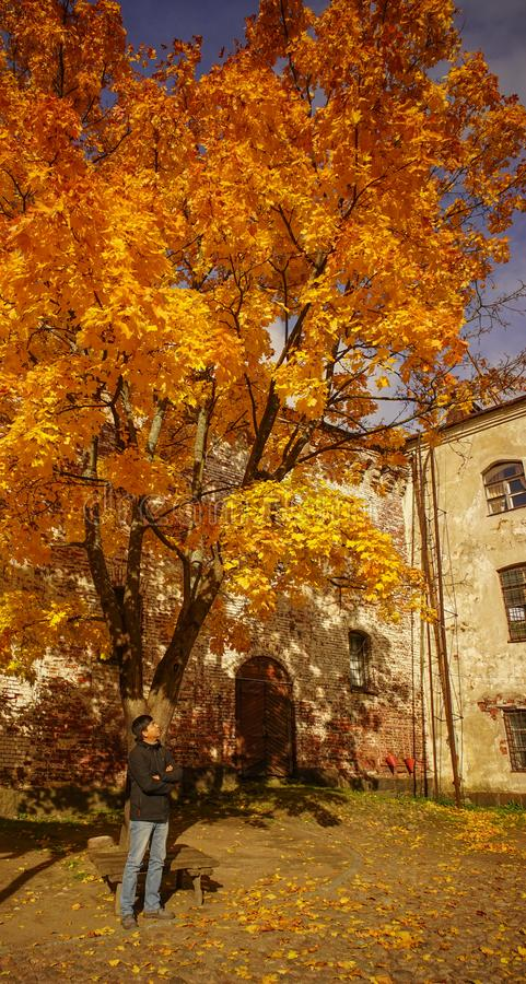 Ancient castle with autumn trees royalty free stock photos