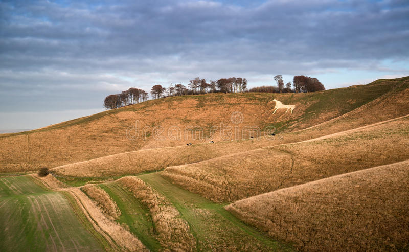 Ancient chalk white horse in landscape at Cherhill Wiltshire Eng. Beauitful landscape of ancient chalk white horse in hill at Cherhill in Wiltshire England stock images