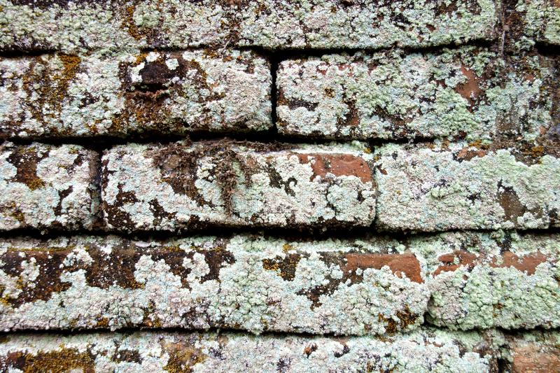 Ancient Clay Bricks Covered in Lichen and Moss stock photos