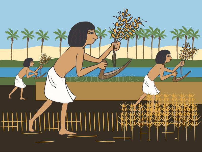 Ancient egyptian peasants harvest on the Nile bank cartoon. Ancient egyptian peasants harvest on the Nile bank, colorful vector cartoon illustration of first vector illustration