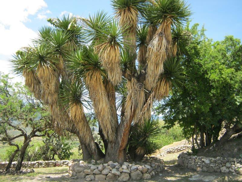 Ancient garden royalty free stock photos