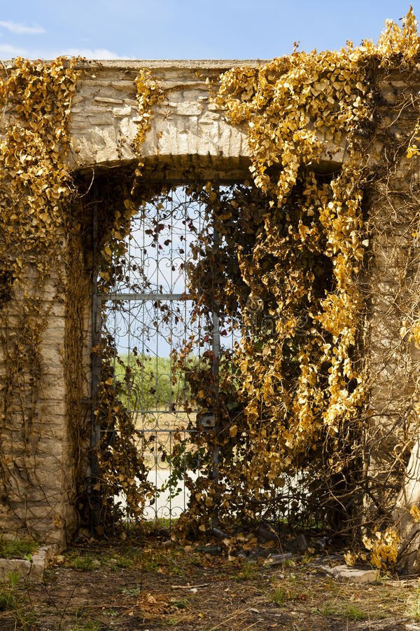 Download Ancient Gate With Yellow Leaves Stock Image - Image: 20463779