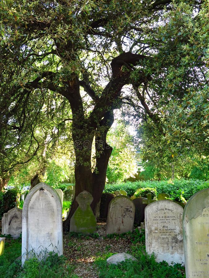 Ancient graves under a tree at the Brompton Cemetery London. View of Brompton Cemetery, in London, UK, with ancient funerary steles and cross located under a royalty free stock image