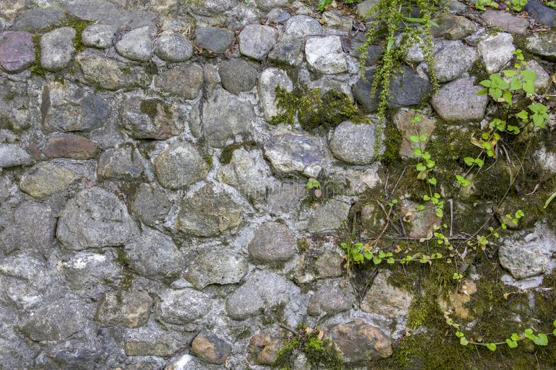 Ancient gray, blue wall of stones of various shapes and sizes with green moss and vegetation. natural surface texture. A ancient gray, blue wall of stones of stock photos