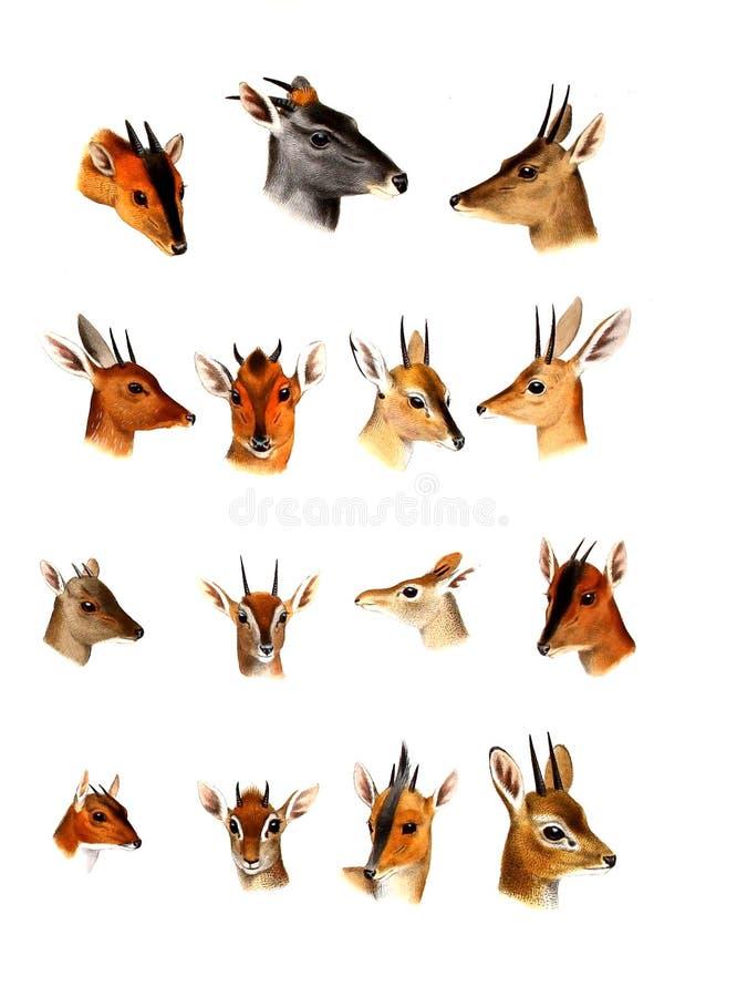 Illustration of a animal. stock illustration