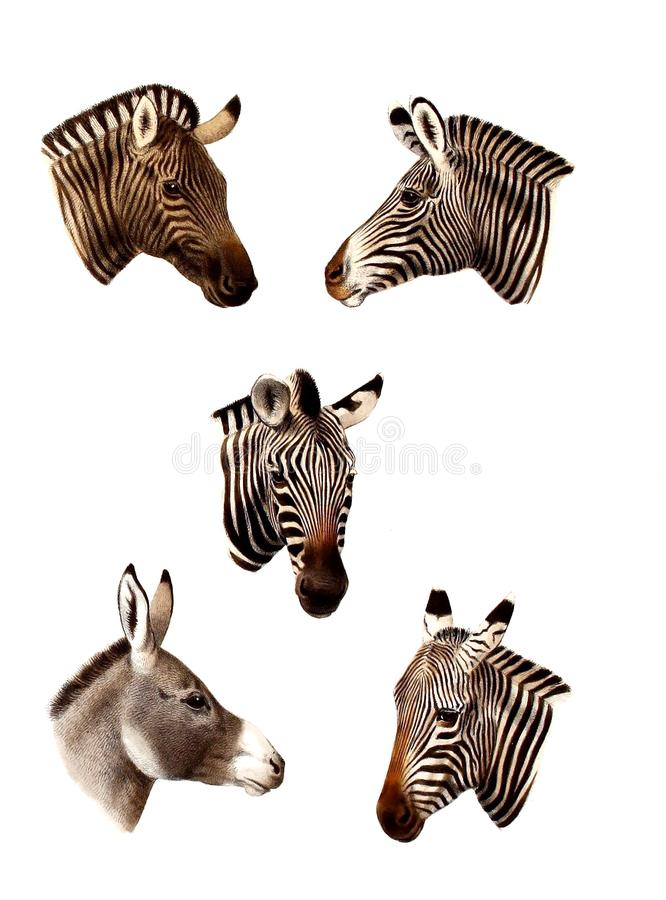 Illustration of a animal. royalty free stock images