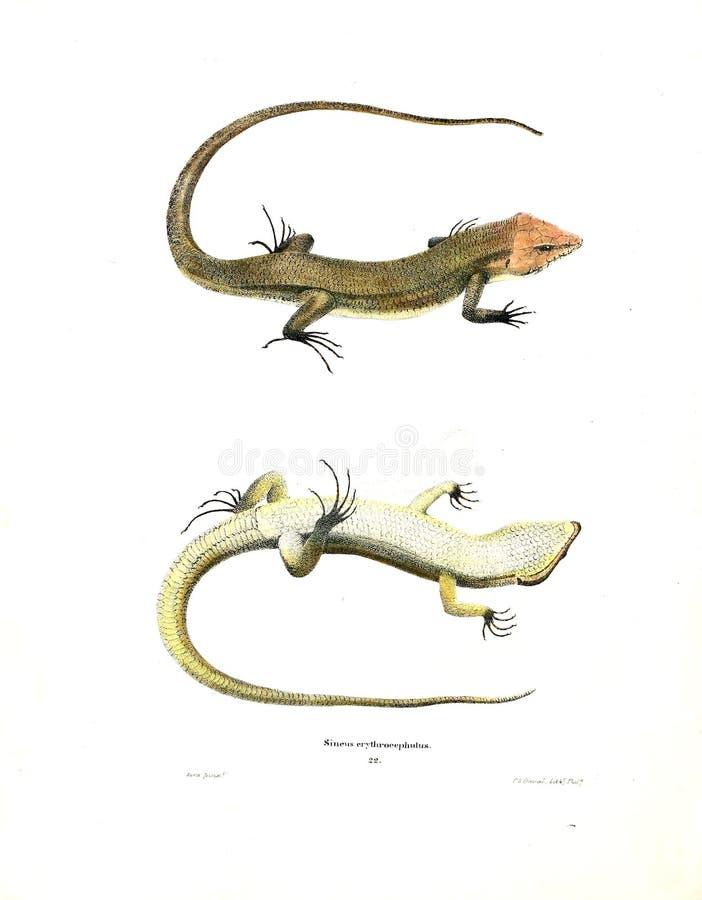 Illustration of a animal. stock photo