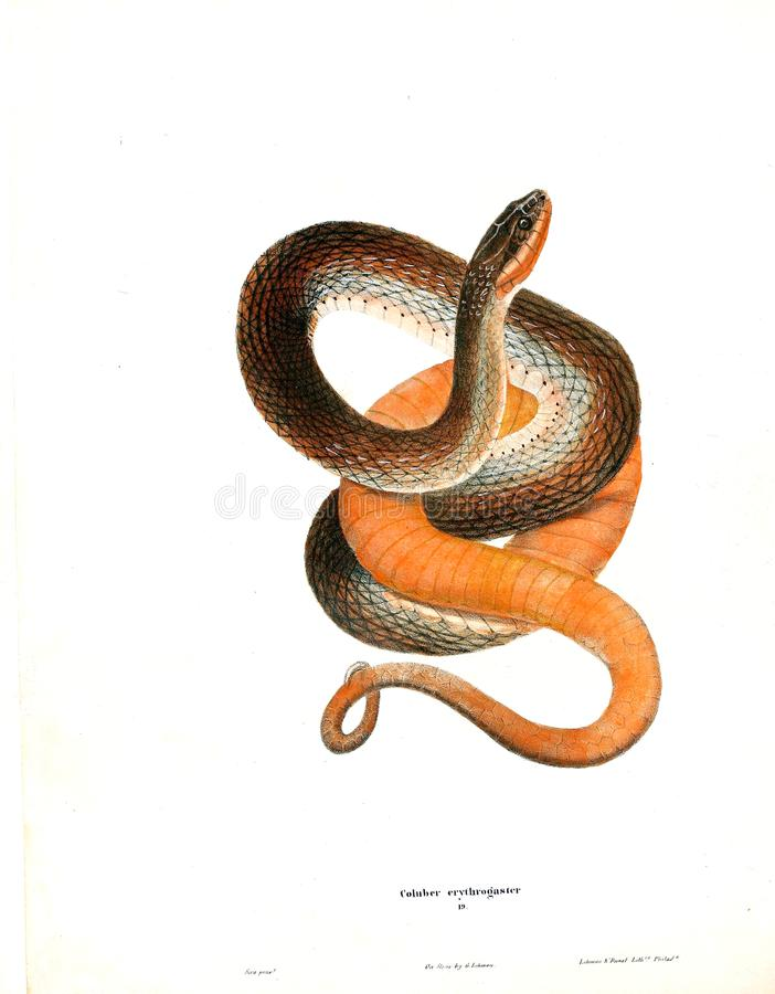 Illustration of a animal. stock photo
