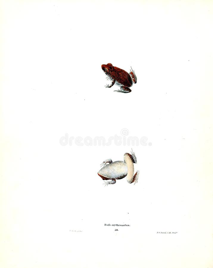 Illustration of a animal. stock images