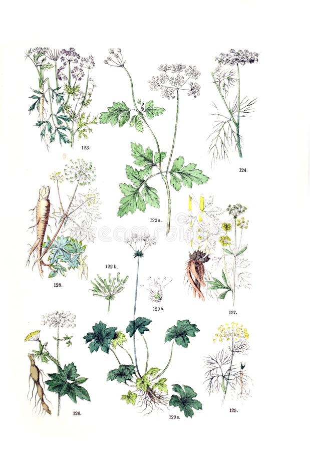 Illustrations of plant. stock photo