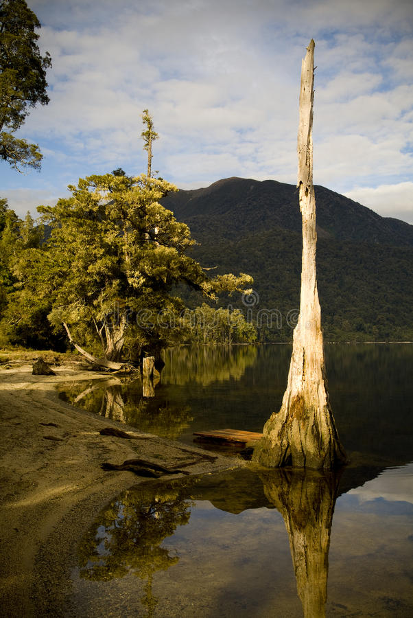 Ancient Lake. Ancient forest reflections on lake edge stock photo