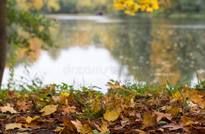 Ancient lake in the park royalty free stock images