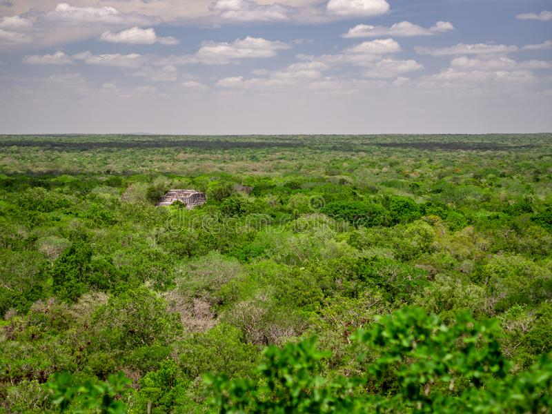 Ancient Mayan stone structure rising out of the jungle canopy at. Calakmul, Mexico with clouds royalty free stock images