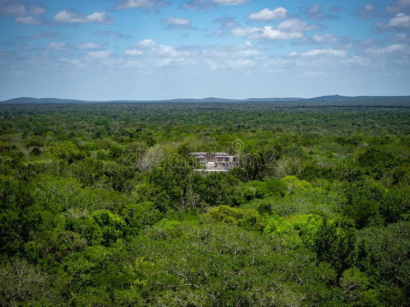 Ancient Mayan stone structure rising out of the jungle canopy at. Calakmul, Mexico royalty free stock photos