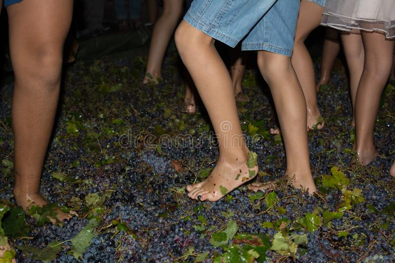 Ancient method to produce wine in which feet crush the grapes af. Ancient method to produce wine in which children& x27;s feet crush the grapes after the grapes stock images