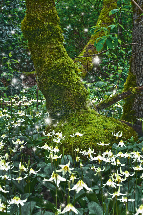 Ancient mossy Tree with Fawn Lily flowers and glowing magical fairies at twilight stock photos