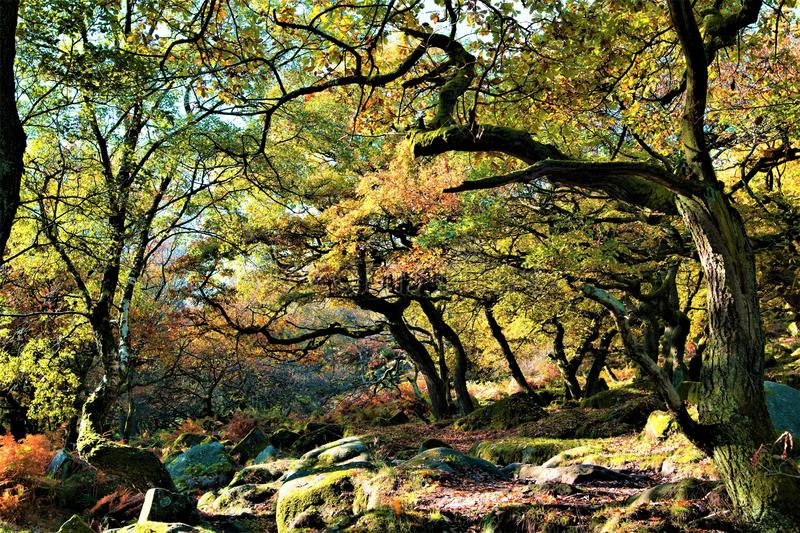 Ancient oak forest in Padley Gorge woods, near Grindleford, East Midlands. Taken to capture the rich autumnal colours within Padley Gorge woods, the largest stock images