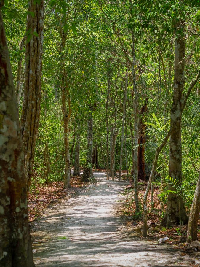 Ancient path through the Mexican jungle in Calakmul. During summer with light shining through royalty free stock photo