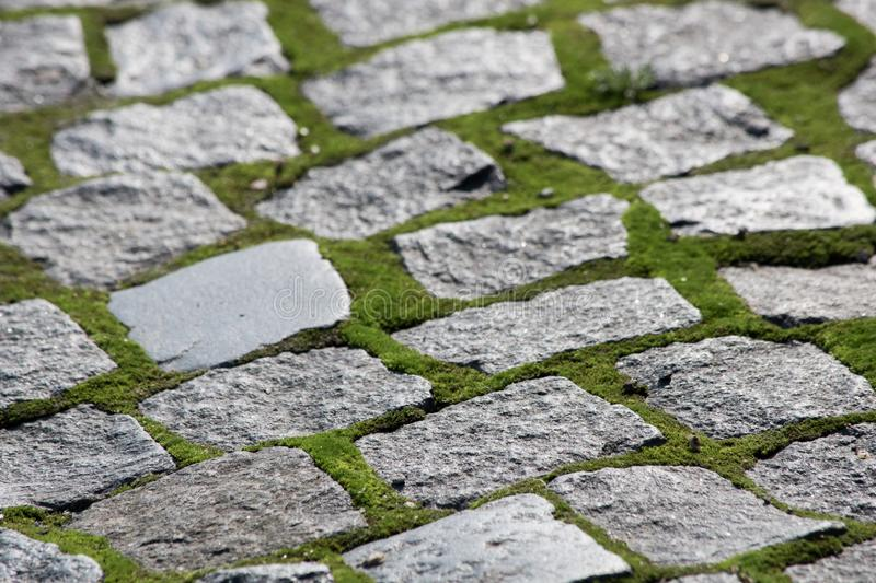 Ancient paving stones with moss. Is close royalty free stock image
