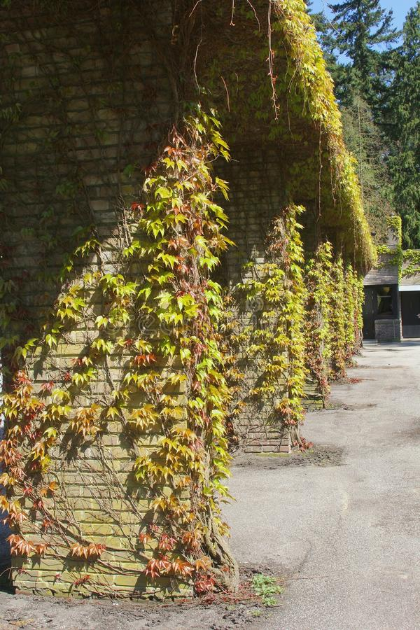 Ancient pillars with grapevine at Dutch graveyard Rusthof, Netherlands. Ancient pillars with grapevine at the cemetery Rusthof in Leusden / Amersfoort in the stock photo