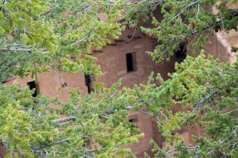 Ancient Pueblo buildings in a cliff dwelling seen through pine branches. royalty free stock photography