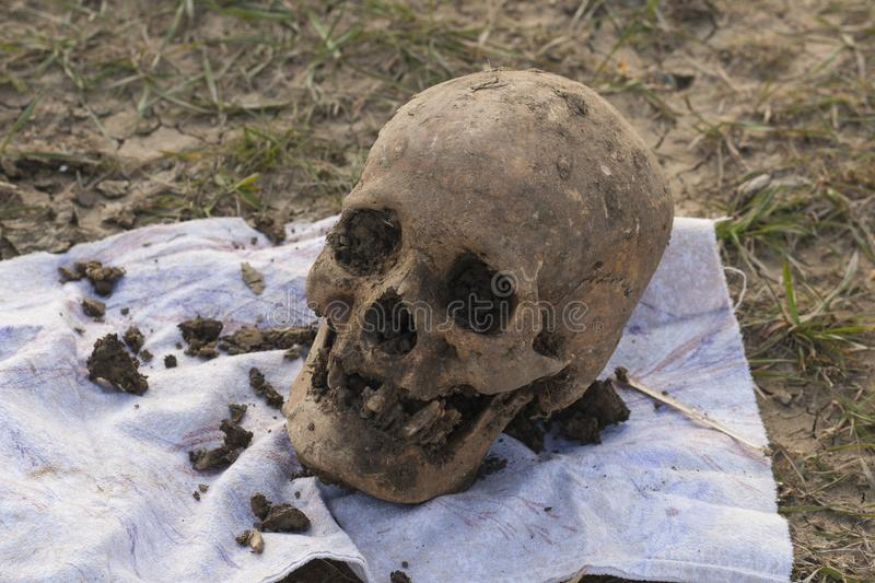Skull of a Nogai woman. Exhumation. The ancient remains of the girl. Millennial bones of a girl. Female skull stock photography