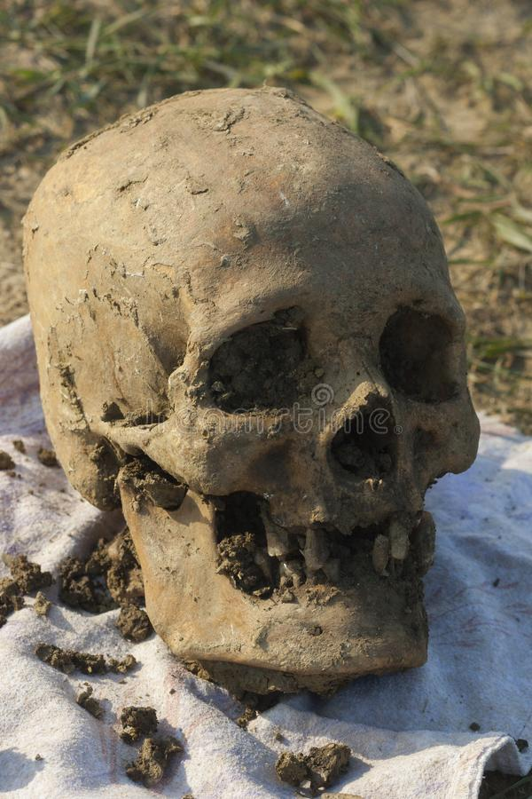 Skull of a Nogai woman. Exhumation. The ancient remains of the girl. Millennial bones of a girl. Female skull stock image