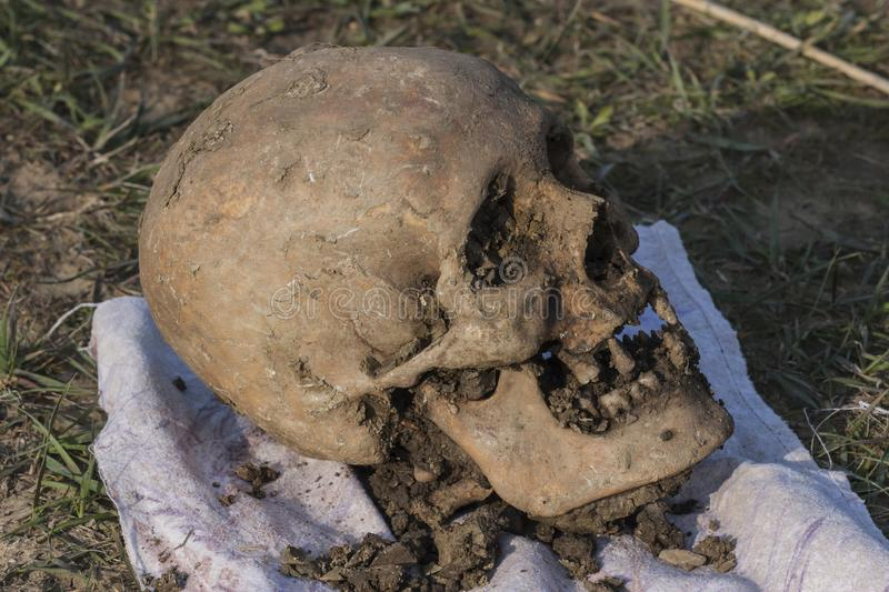 Skull of a Nogai woman. Exhumation. The ancient remains of the girl. Millennial bones of a girl. Female skull royalty free stock photography