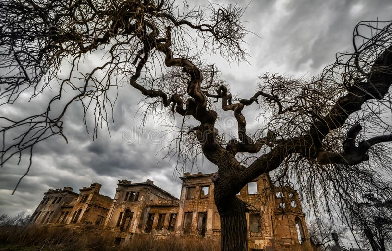 The ancient ruins of the mansion and a tree with curved bizarre branches. Mystical scary fabulous photo. Halloween celebration. stock images