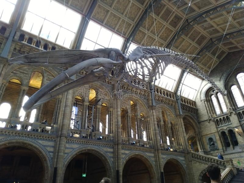 Ancient skeleton museum  beautiful day United Kingdom,. Ancient  skeleton museum United Kingdom, a truly beautiful Europe and its landscape makes me cry to visit stock images