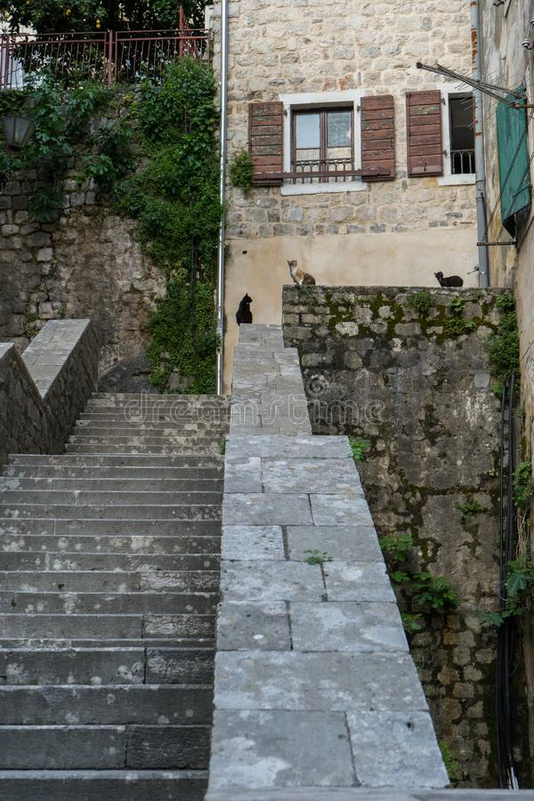 Ancient stairs in Old town Kotor. Medieval stone staircase between apartment buildings in the old town center of Montenegro. Cats. In the street waiting for stock photo