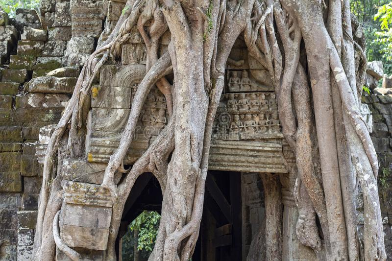 Ancient stone ruin of Banteay Kdei temple, Angkor Wat, Cambodia. Ancient temple in old tree roots. Angkor Wat detail. Khmer heritage place of interest. Asia royalty free stock images