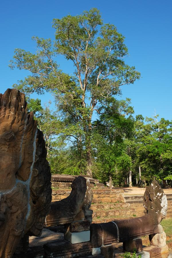 Ancient stone ruins in Asia. Trees near stone sculptures.  stock photo