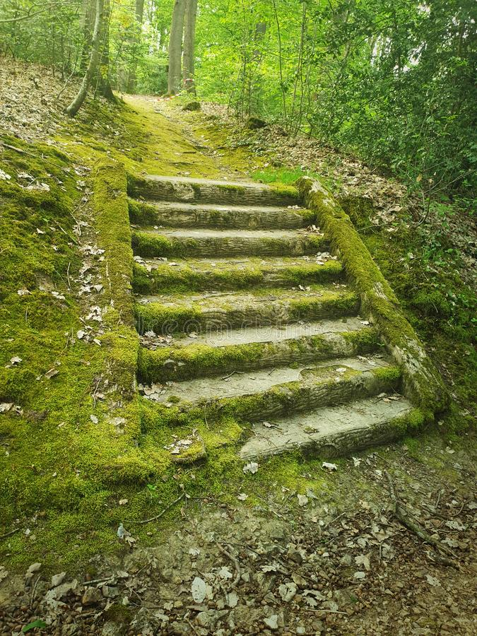 Ancient stone stair steps in the woods covered by green moss. Mysterious fairytale scene with an old stairway royalty free stock image