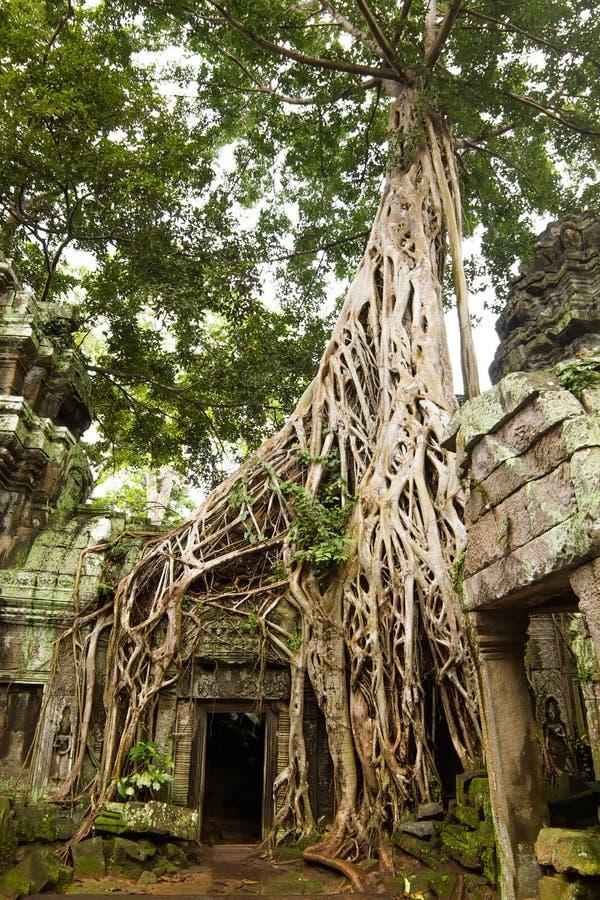 Ancient Ta Prohm Temple Stock Photo