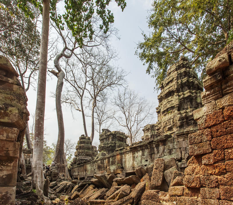 Ancient Ta Prohm temple, Angkor Thom, Siem Reap, Cambodia. Scenic of ancient Ta Prohm temple, Angkor Thom, Siem Reap, Cambodia. The temple is covered by century stock images