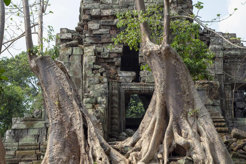 Ancient temple view near Angkor Wat, Siem Reap, Cambodia. Tree growing in temple ruin. Popular tourism destination place. Travel and sightseeing in Angkor royalty free stock images