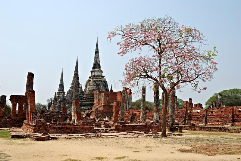 Ancient Thai temple ruins with tree stock photos