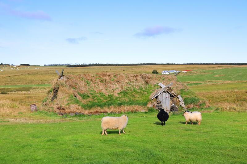 Ancient traditional turf house.  Sheeps on the grass in front of the house. The common Icelandic turf house would have a large foundation made of flat stones stock photo