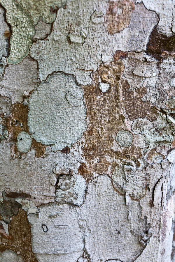 Ancient tree texture stock images