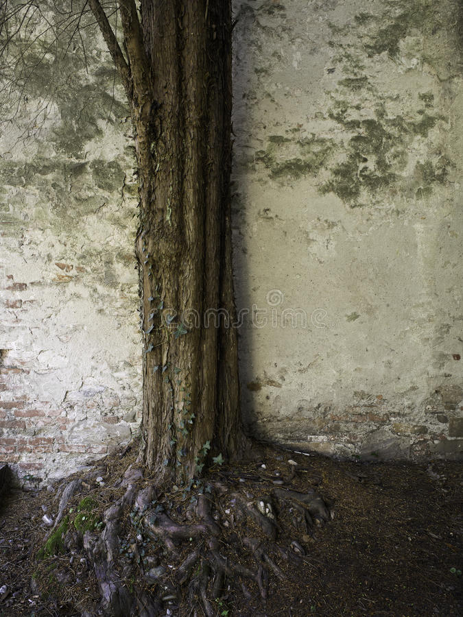 Ancient Tree And Wall Stock Images