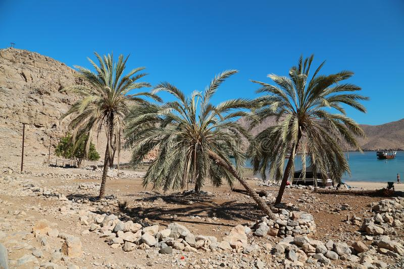 Ancient Village of Haffa, Sultanate of Oman, Musandam peninsula, Gulf of Oman. Palms in ancient Village of Haffa, Sultanate of Oman, Musandam peninsula, Gulf of royalty free stock images