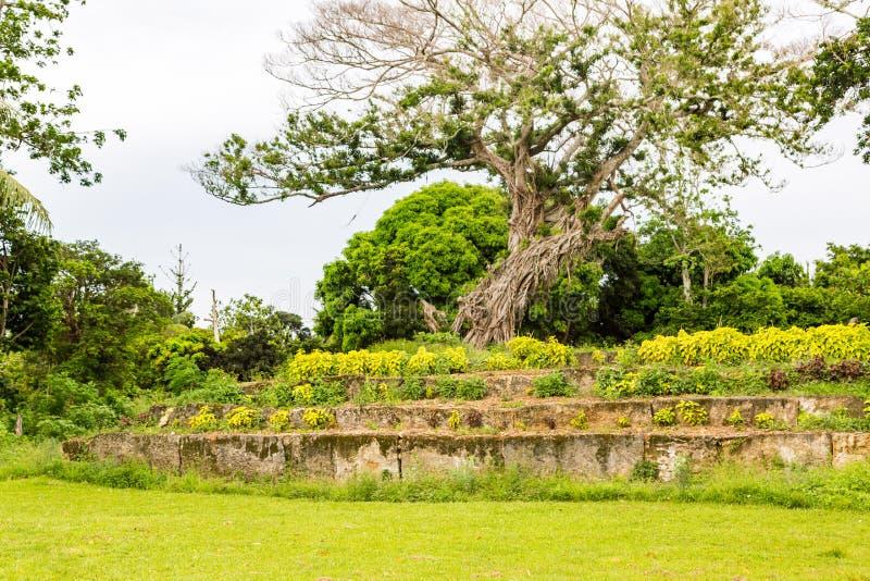 An ancient ziggurat Langi - Royal burial tomb - near Lapaha, megalith in Mu`a, east of Tongatapu island, Tonga, Polynesia, Oceania. An ancient ziggurat Langi royalty free stock photography