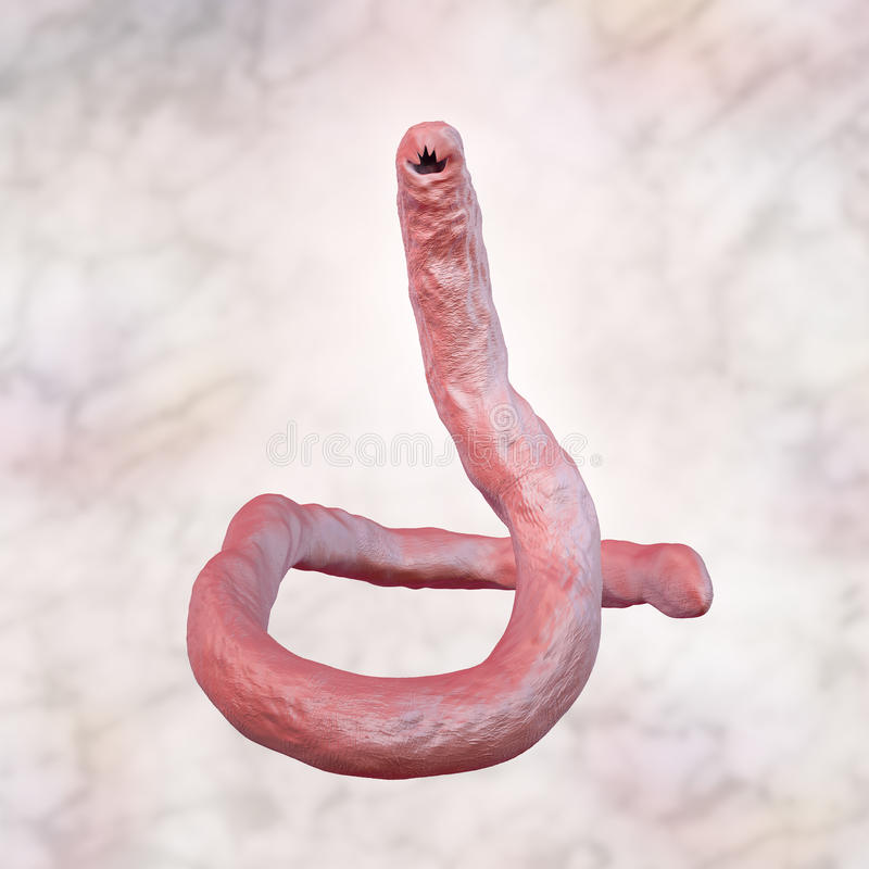 Ancilóstomo parasítico Ancylosoma ilustração do vetor