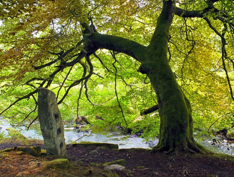 Ancinetstanding stone underneath an overhanging tree with bright Autumn leaves next to a flowing small river with rocks and boulde stock photo