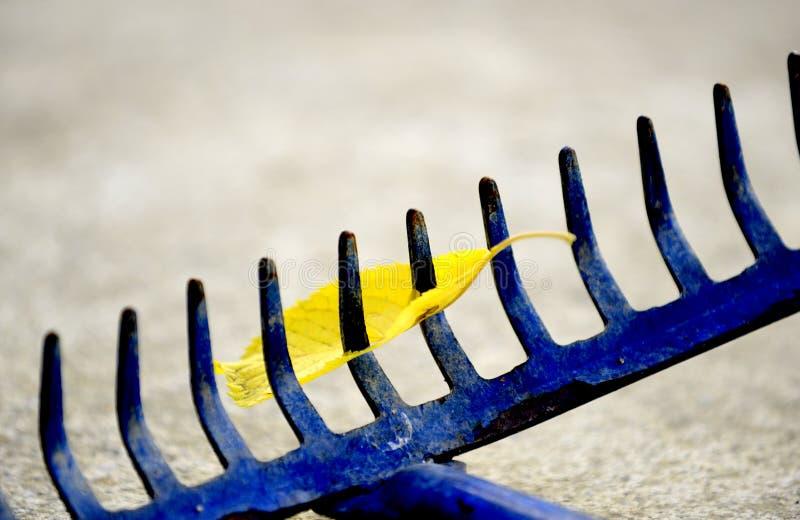 ancinho da folha da ferramenta de jardim com única folha, imagem foto de stock royalty free