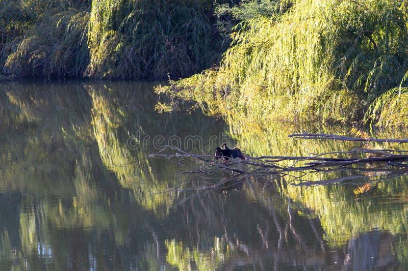 Ancora riflessioni del fiume dell'acqua immagini stock libere da diritti