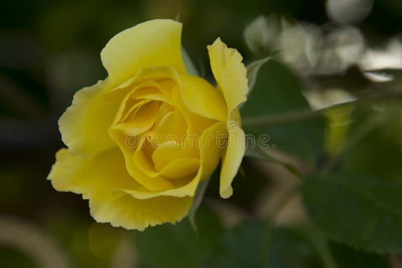 Download Ancora Un Altra Perfezione Sbalorditiva Fotografia Stock - Immagine di petali, nave: 117980352