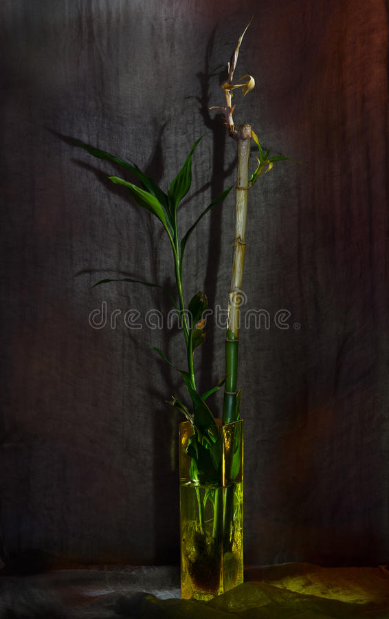 Ancora-vita con bambù immagine stock libera da diritti